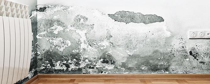 schimmel in de kelder komt erg veel voor en dat is op zich ook niet zo vreemd want in veel kelders zijn de groeiomstandigheden voor schimmels ideaal