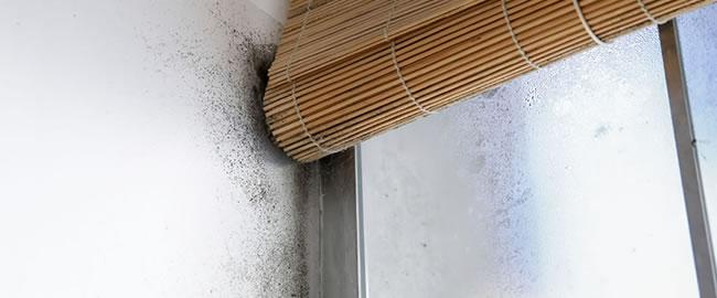 schimmel op ramen raamkozijn